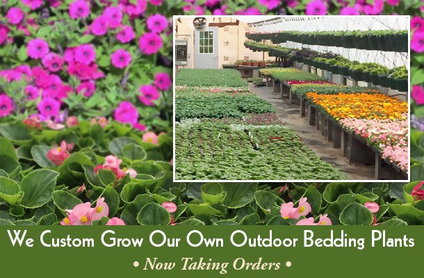 Outdoor bedding plants offered by Interior Tropical Gardens