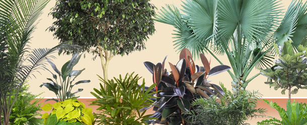 Various plants offered by Interior Tropical Gardens