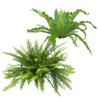 Assorted varieties of indoor tropical Ferns