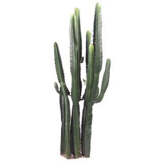 Cactus-like Euphorbia